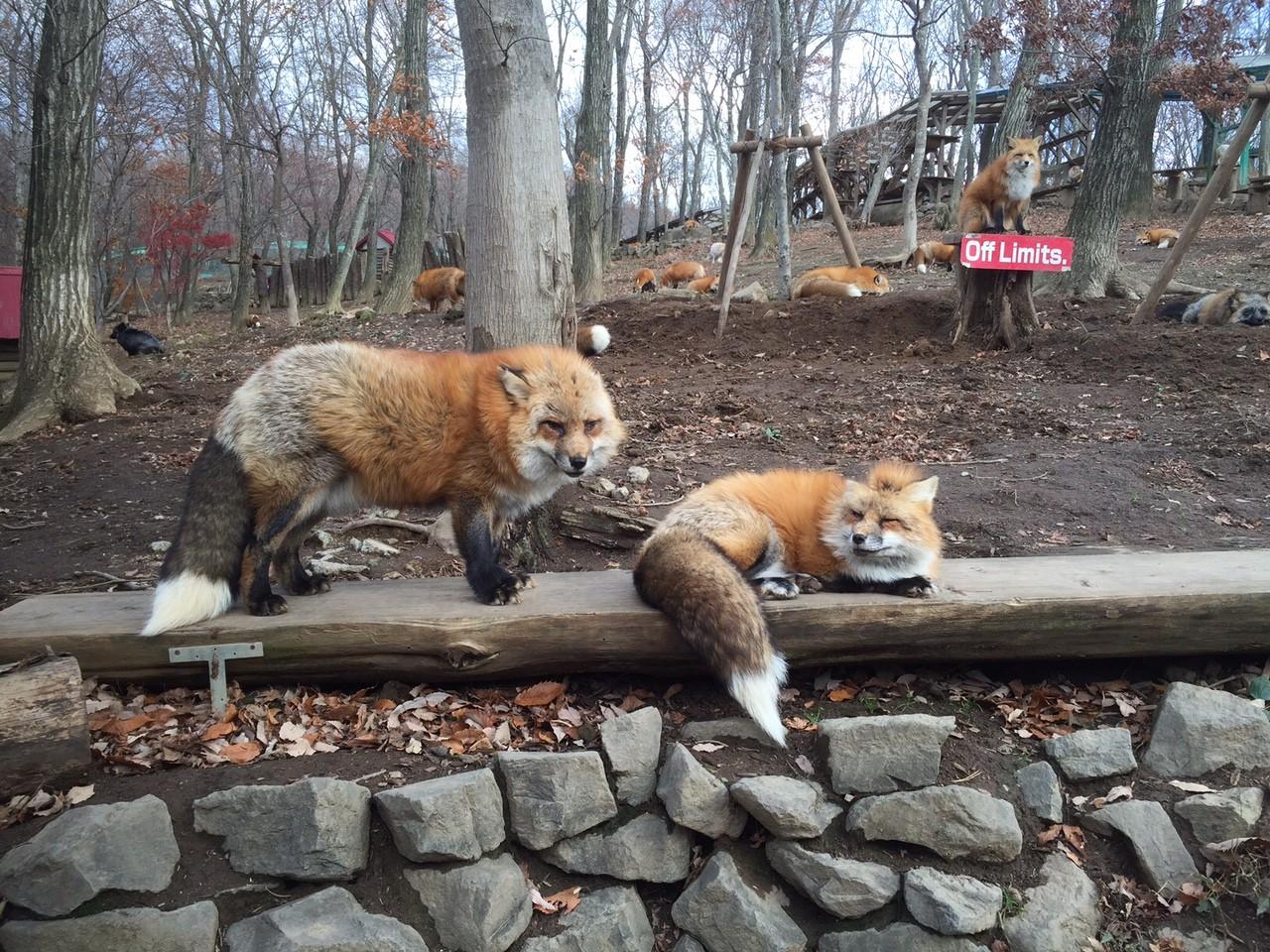fox village3