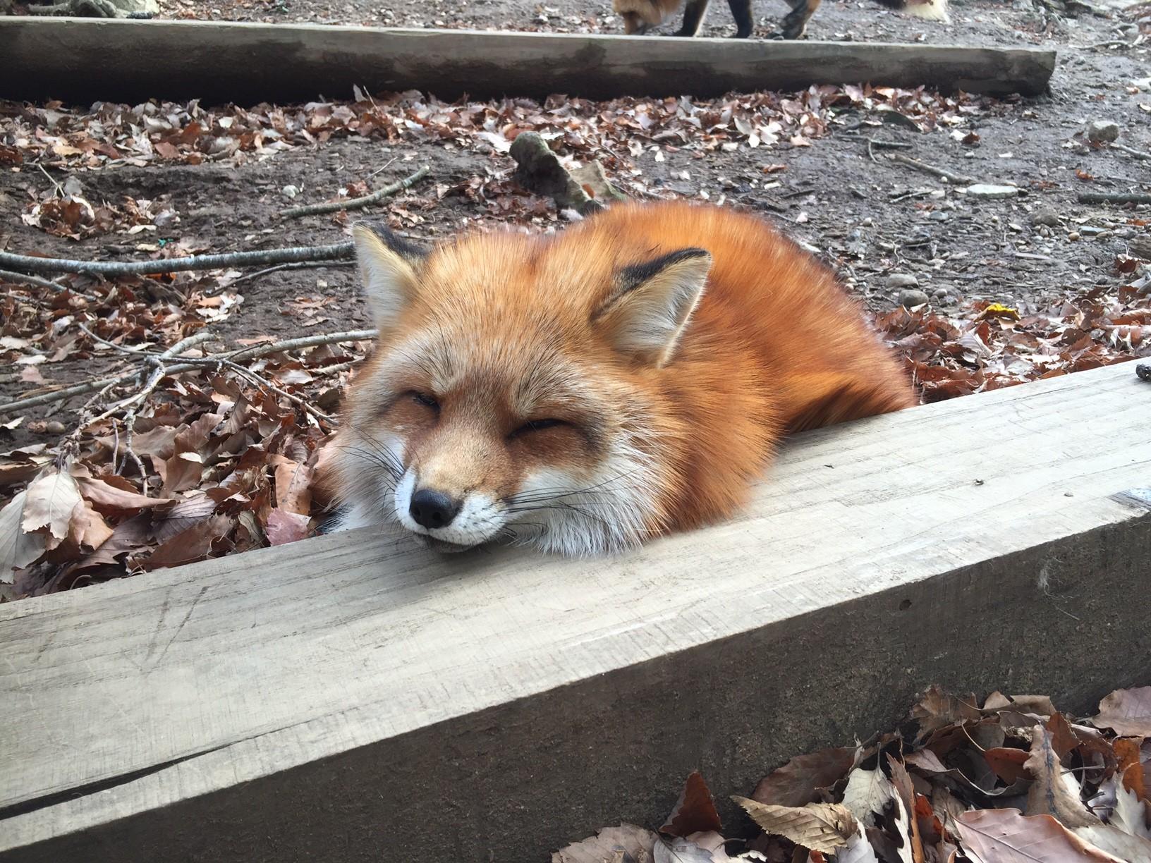 fox village4